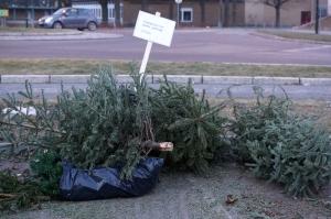 Oppsamlingsplass for juletrær. Her ved CoopPrix på Hovland. Foto: Jan E. Thorstein©