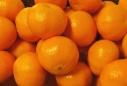 klementin-ikke-mandarin20.jpg