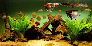 Akvariefisk. Foto: Ellinor Dalen Thorstein