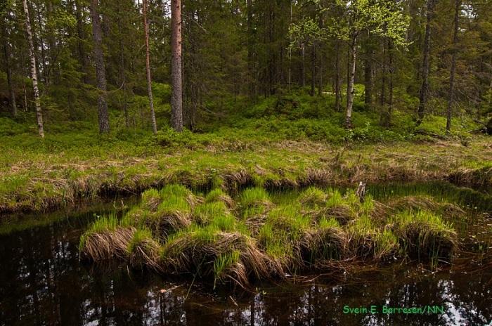 Svartangen_Langs vannet 1 (1)