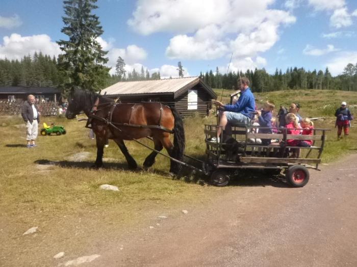 Brian kjører med hest og vogn på N-setra 3.7.16