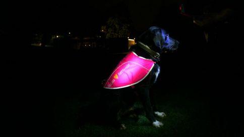 hunder-pakjores_6205-700