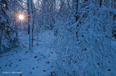 i-vinterskogen-1
