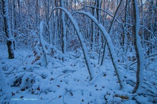 i-vinterskogen-2