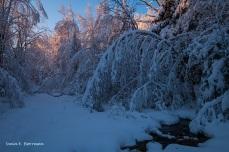 i-vinterskogen-3